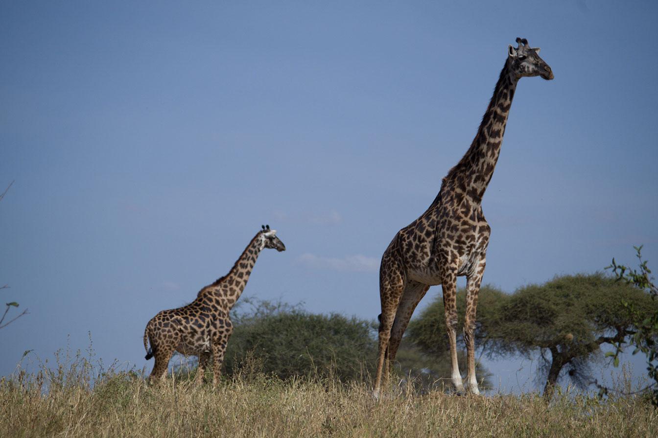 blog de viajes Tanzania