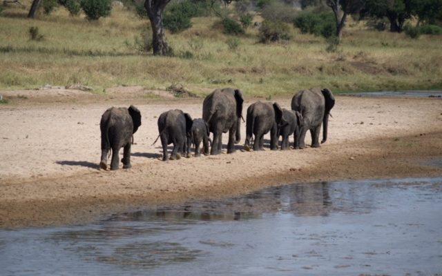 Safari por Tanzania