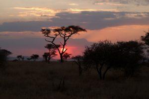 atardecer en Parque nacional del Serengeti