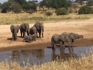el parque nacional del Tarangire,elefantes en el río