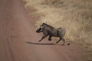 a la carrera en Parque del Serengeti