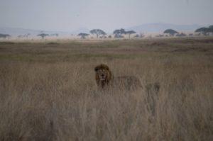 Parque del Serengeti y Lake Masek