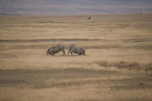 Cráter del Ngorongoro y los 6 grandes de África