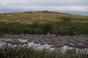 Cráter del Ngorongoro hipopótamos bañándose
