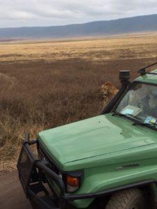 leona refugiándose
