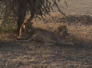 recomendaciones para un safari en Tanzania