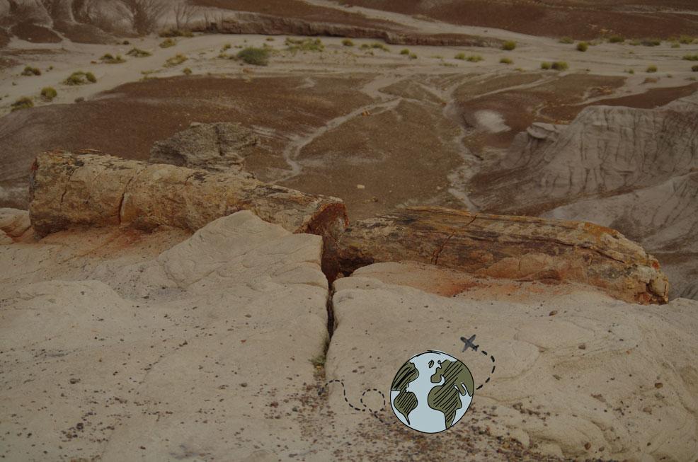 Cómo planificar tu viaje a The Petrified Forest en 8 pasos
