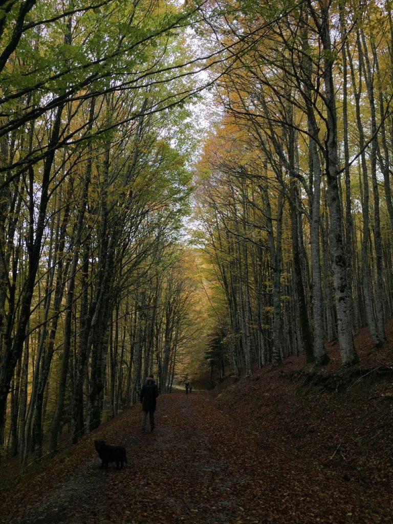 Bosque Selva Irati
