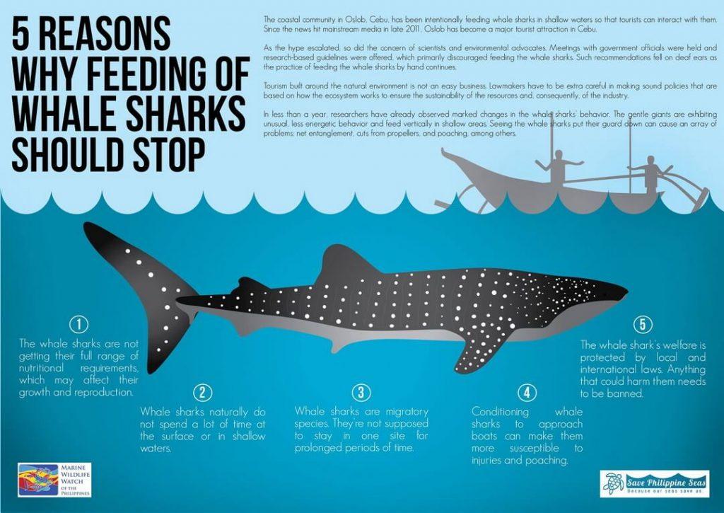 5 razones por las que alimentar al tiburon ballena debe parar